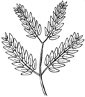 Bipinnate Leaf Arrangement 001.png